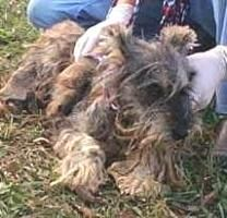 Terrified and matted